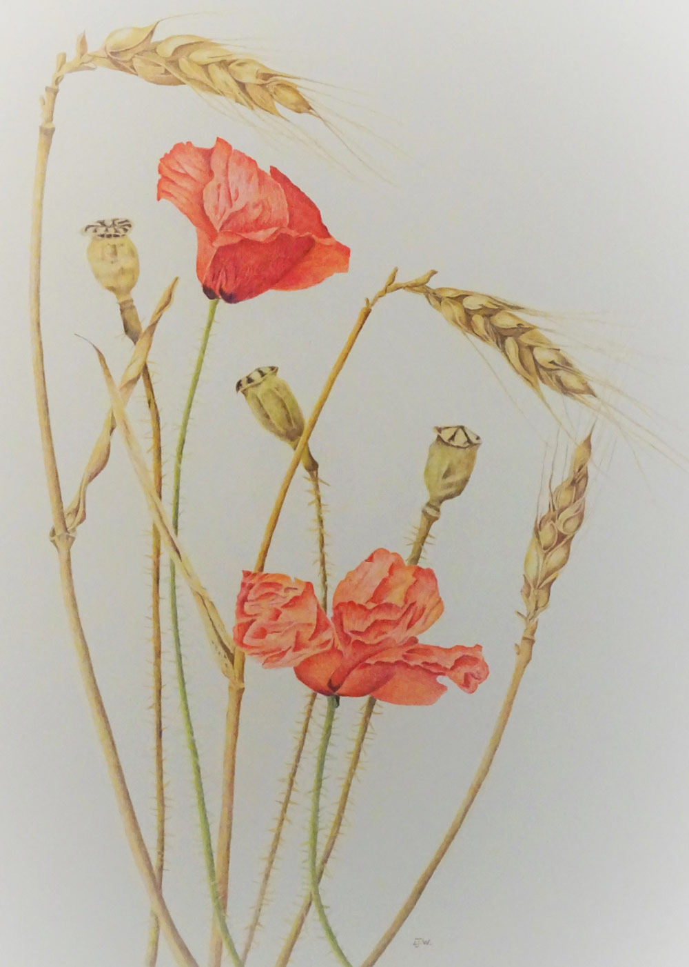 Oats and Poppies