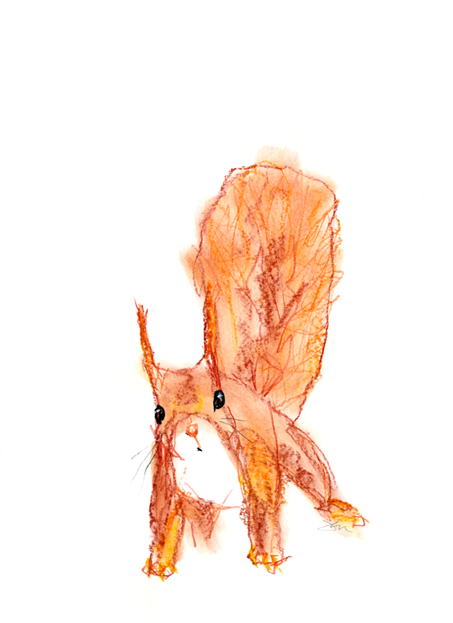 Red Squirrel - Pastel on 420 x 29mm heavy paper - Jen Dixon